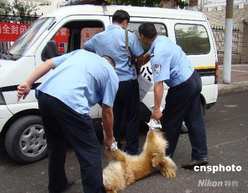 图:疯狗咬伤5人后险入幼儿园