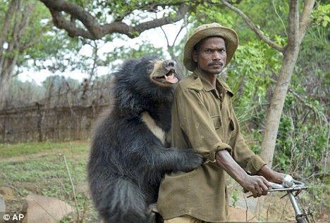 蒙达去年在森林里捡柴时发现了这头失去双亲的黑熊幼仔,好心的蒙达