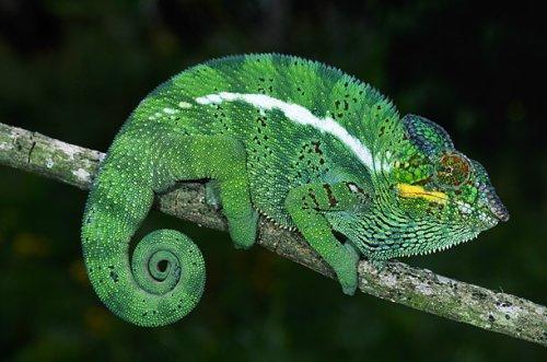 马达加斯加奇特动植物[组图]