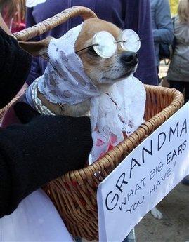"""""""出席""""活动的小狗装扮造型别致,模样可爱,让人忍俊不禁,欢乐开怀."""