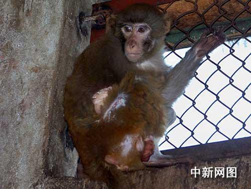 可爱真实猴子图片