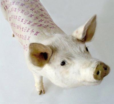 《艺术农场》作品中,8头纹身活猪亮相现场,其中2头刺的就是lv图案.