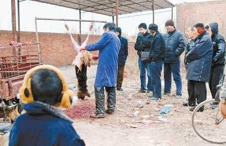 人间万象_菜市场当街杀狗叫卖 场面血腥吓坏路人(图)_资讯_凤凰网