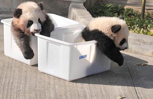 08年最让人喷饭的动物趣图:哪个最可爱?