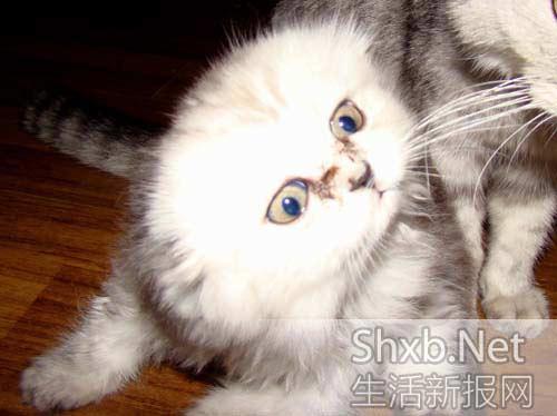 是一只很可爱的小母猫