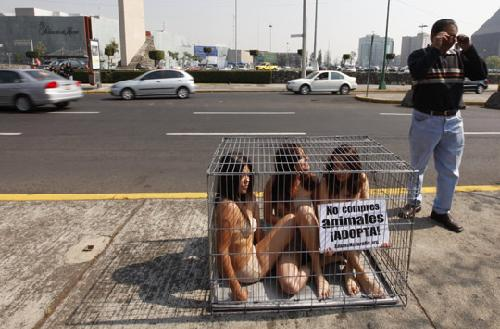 墨西哥美女裸身钻铁笼抗议买卖宠物组图