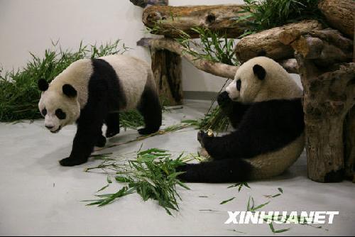 马英九今晚将参加台北动物园熊猫馆开馆仪式
