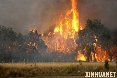 据统计,每年发生在澳大利亚的人为森林火灾已上升到总数的一半,该国