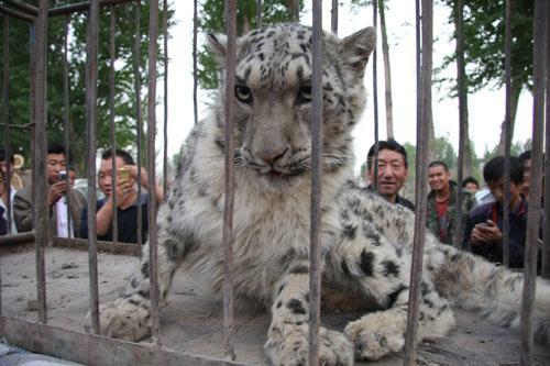 """""""他看过《动物世界》,从外貌特征上他基本可以判断眼前的动物是什么."""