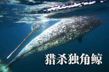 壁纸 动物 海洋动物 鲸鱼 桌面 450_300