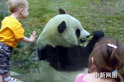 华盛顿国家动物园将把熊猫泰山交还中国(图)