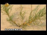 内蒙古人民坚强与风沙做斗争的故事