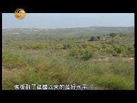 陕西榆林毛乌素沙地边缘12年治沙纪事