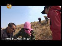 甘肃定西退耕造林工程