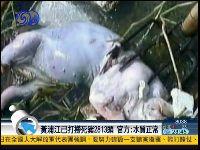 上海松江水域已打捞死猪3323头 就地处理难度大