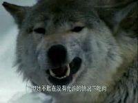 野生动物的哭泣