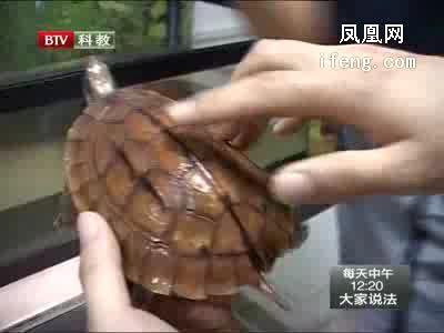 珍稀野生动物保护进行时(5)