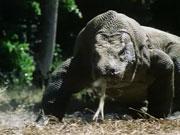时间的足迹 传说中的怪兽