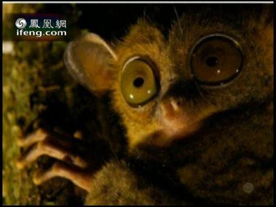 地球宣言:野生动物摄影展——眼镜猴