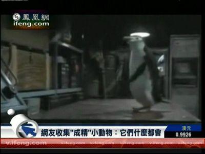 网友收集模仿人类小动物:企鹅会打乒乓球-互联星空