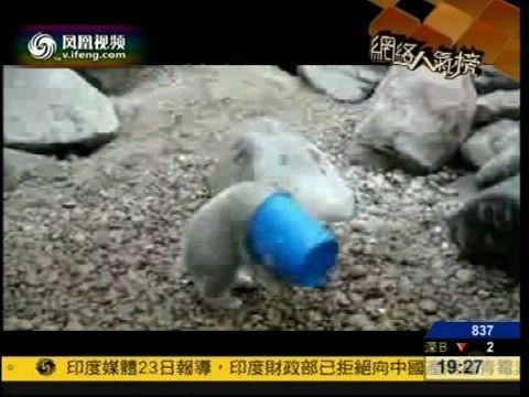 水桶捕鼠器视频