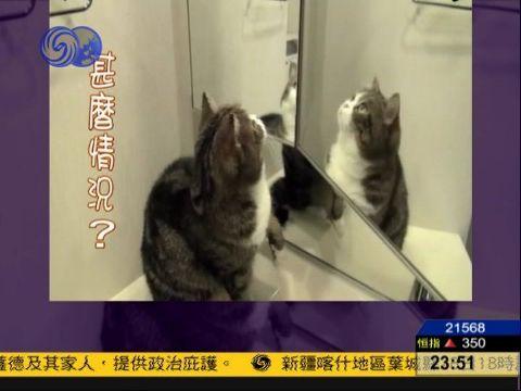 实拍可爱猫咪照镜子 真真假假分不清