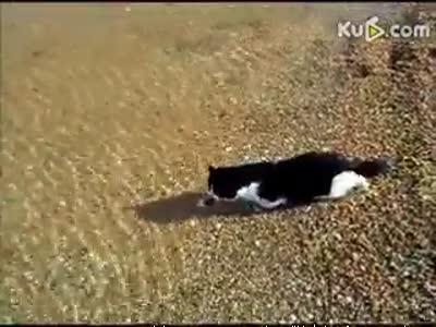 俄罗斯游泳猫