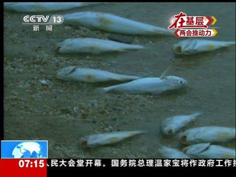 中华白海豚图片