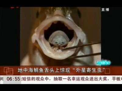 """地中海鲷鱼舌头上惊现""""外星寄生虫"""""""