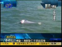 中华白海豚搁浅