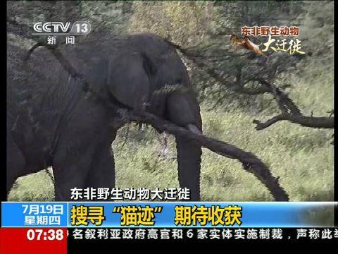 """东非野生动物大迁徙 搜寻""""猫迹""""期待收获"""