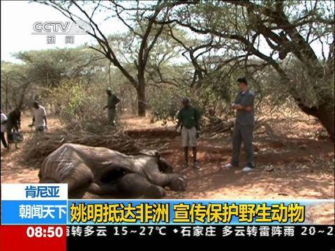 姚明抵达非洲 宣传保护野生动物