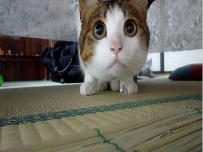 拥有一双水汪汪大眼睛的萌猫