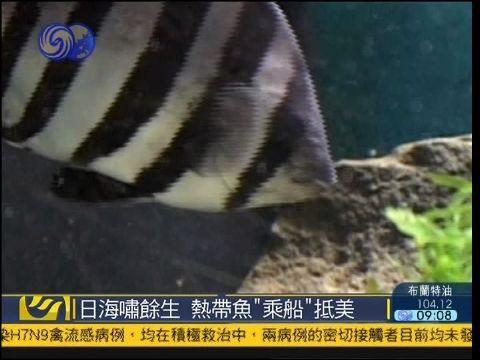 海啸对动物的影响