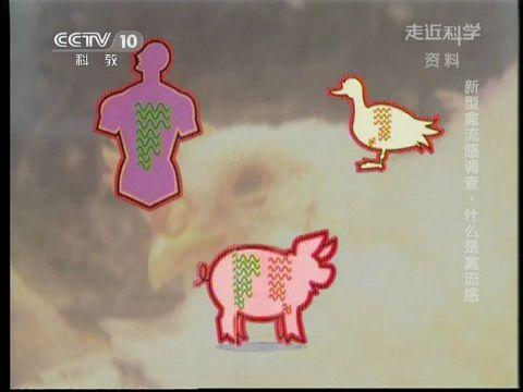2013-04-13走近科学 新型禽流感调查