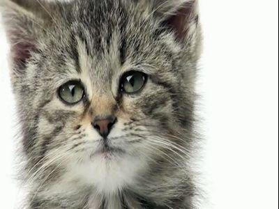 《悲伤猫日记》郁闷的猫科动物