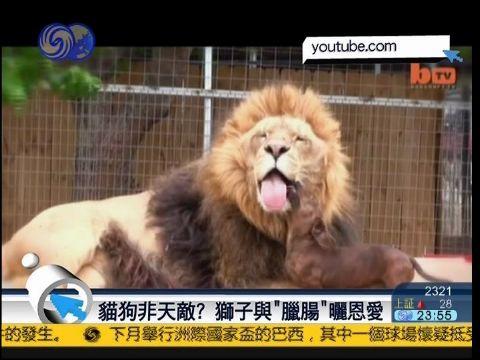 狮子的天敌是什么动物