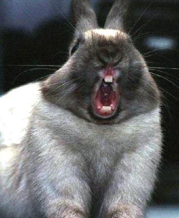 动物们犯困的表情(图)