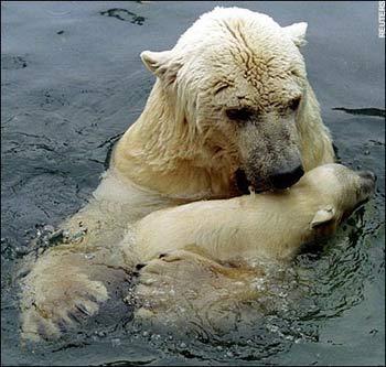 北极熊a厨房的生存厨房故事有长蜗牛怎么杀图片