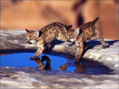 可爱的野生动物宝宝