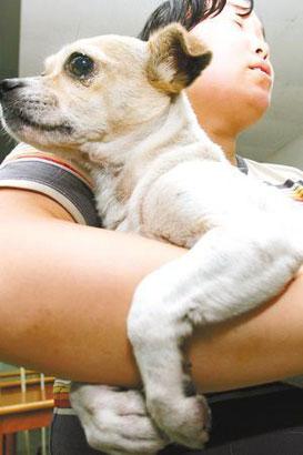流浪狗被清洁工打伤 小区居民乱扔垃圾抗议