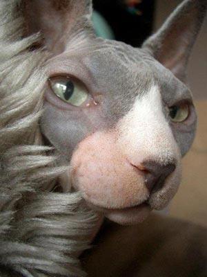 世界上10种最丑陋动物