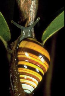 濒临灭绝乌龟之十+夏威夷动物小蜗牛如何强行喂食图片
