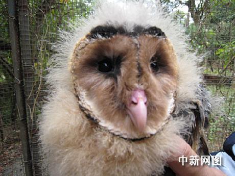 """广东徐闻发现珍稀濒危动物""""猴脸鹰""""(组图)"""