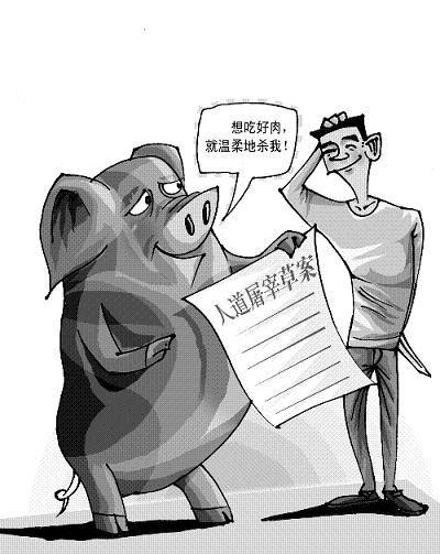 动物写生素描猪