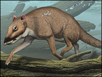 《自然》:鲸的祖先是一种类似鹿的哺乳动物