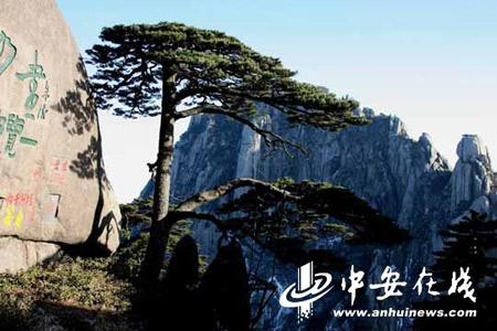 黄山总面积1200平方公里,其中风景名胜区为154平方公里,1985年以唯一