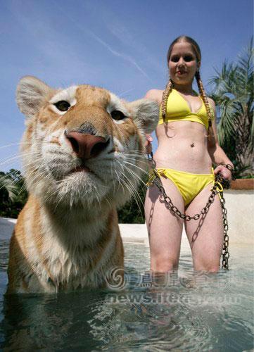 与小老虎们一起游泳已是她们的例行工作.