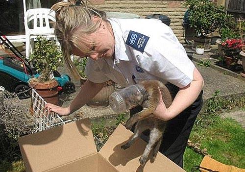 据英国《每日邮报》5月14日报道,狐狸以狡猾著称,但当它饿昏了头时,再狡猾也派不上用场了,下面这个故事就是一个很好的例子。