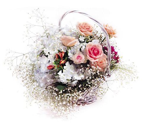 视频    坎布里亚系列紫精灵与樱桃白兰地玫瑰的搭配,尽显英伦复古,尊